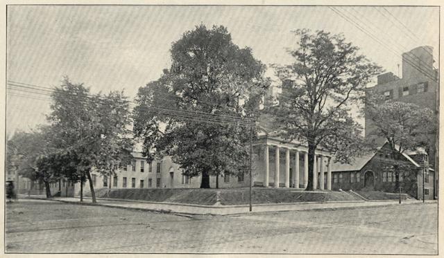The original elm tree